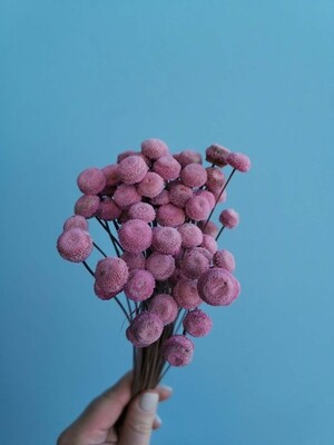 Ботао розовый Италия