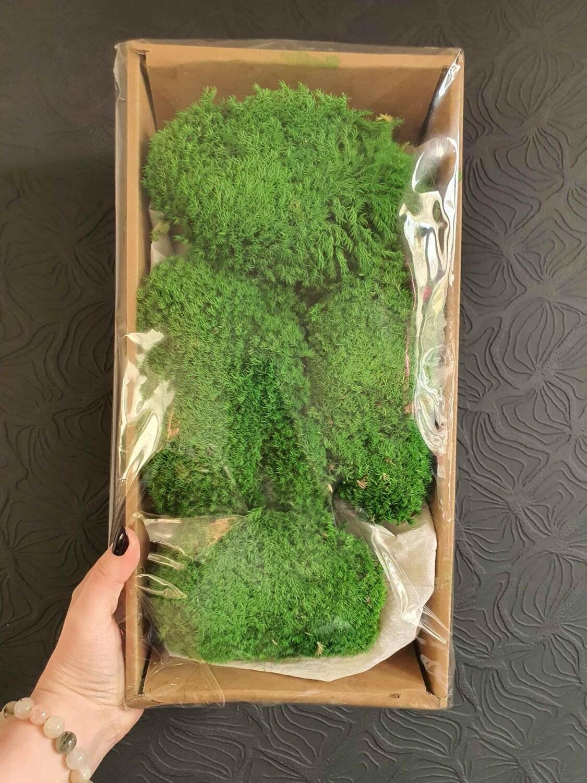 Мох зеленый кочками стабилизированный