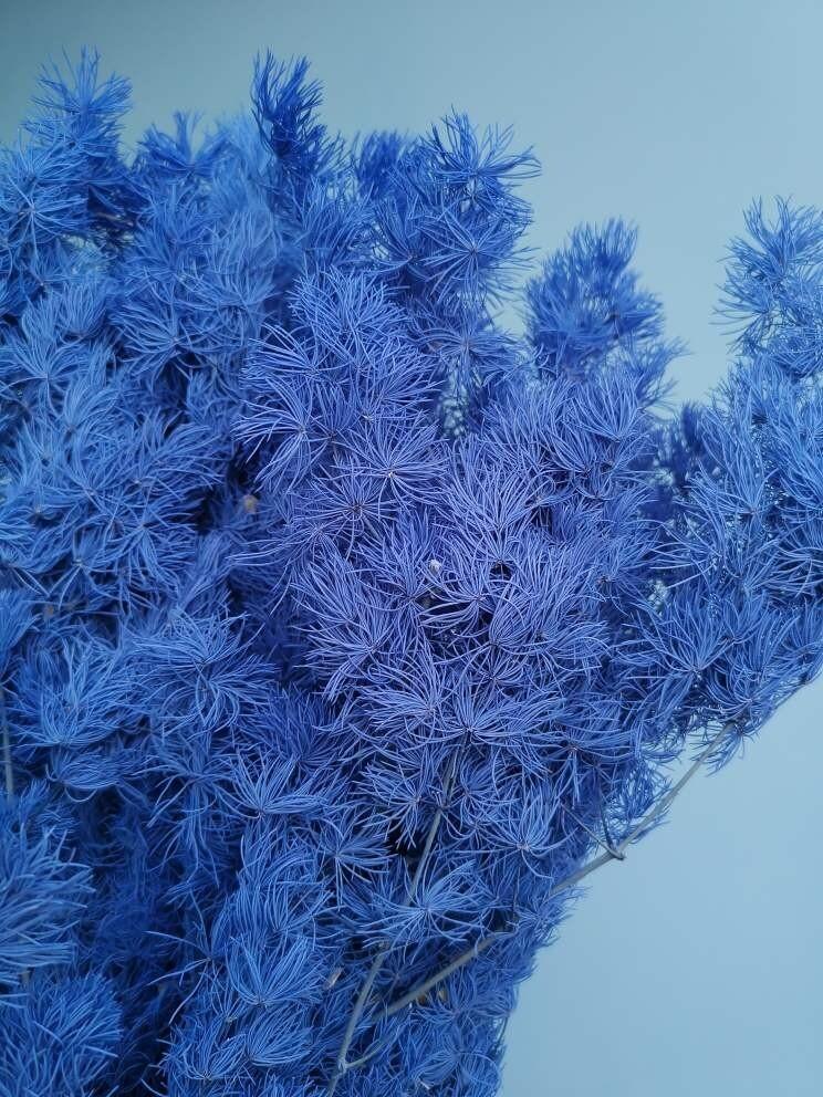 Аспарагус Синий стабилизированный