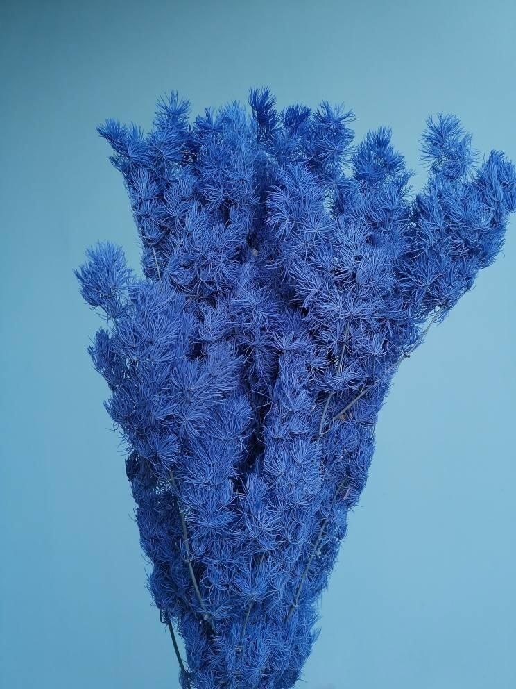 Asparagus stabilized blue