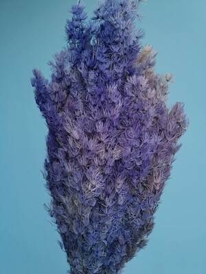 Аспарагус фиолетовый стабилизированный