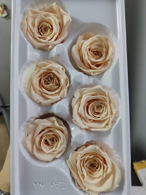 Роза персиковая нежная 5см стабилизированная