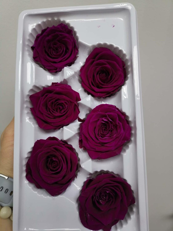 Роза слива вельвет 5см стабилизированная