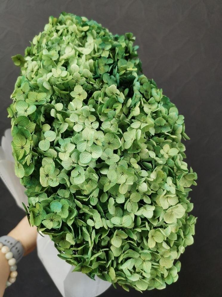 Гортензия зелёная яшма стабилизированная