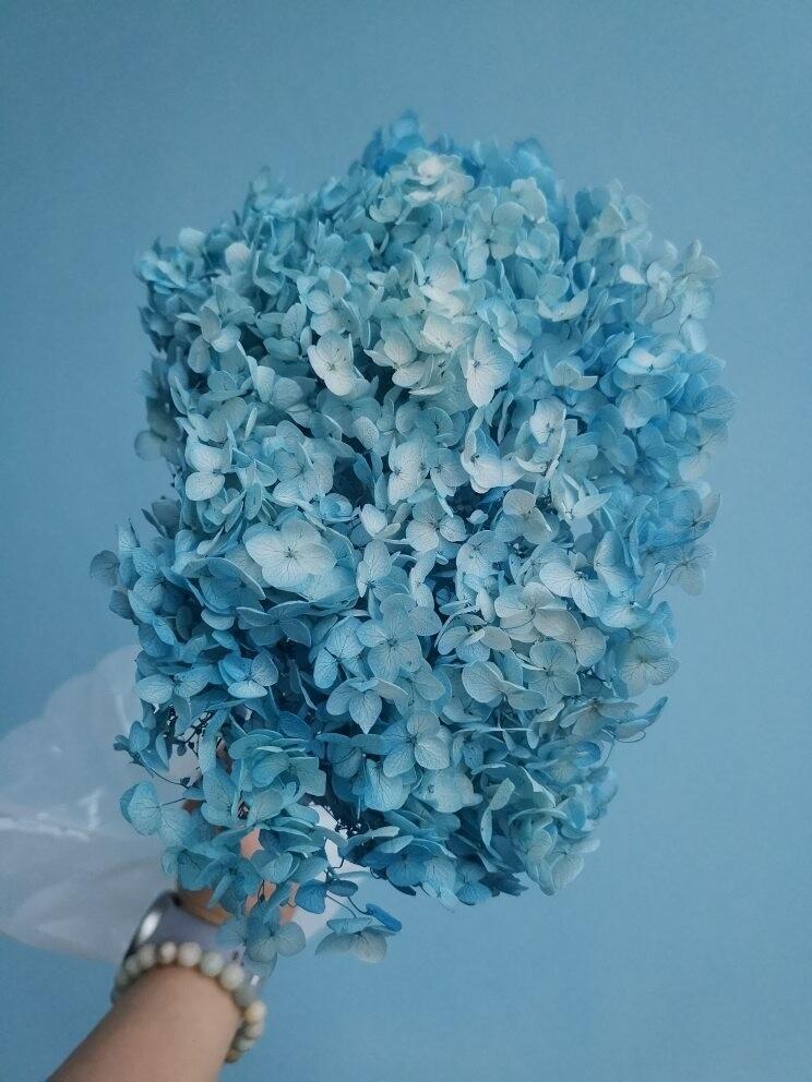Гортензия голубая стабилизированная