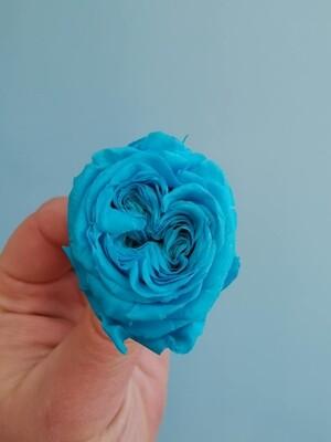 Роза голубая яркая 2,5-3см пионовидная стабилизированная