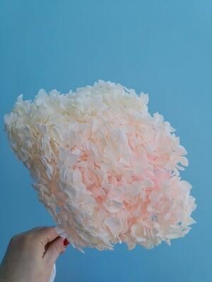 Гортензия бело-розовая