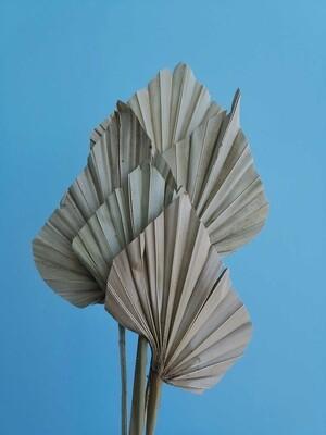 Листья пальмы сухие натуральные 5 штук