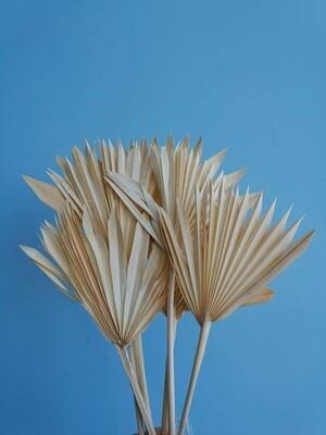 Листья пальмы сухие веером белые 6 шт