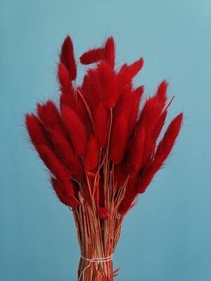 Лагурус красный Краснодар