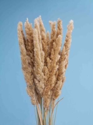 Вейник или колоски лисий хвост натуральные