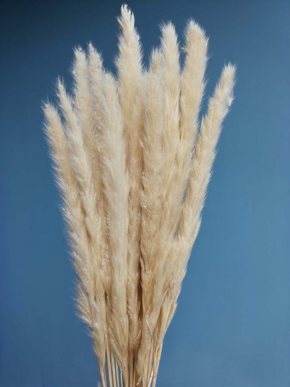 Пампасная трава мини пшеничного цвета