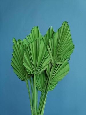 Листья пальмы сухие зеленые 10 шт
