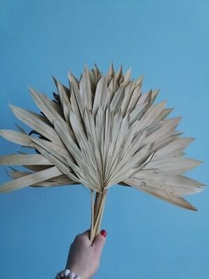 Листья пальмы натуральные сухие веером 6 шт