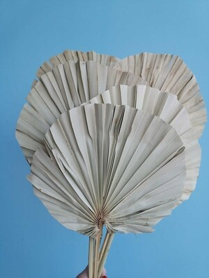 Листья пальмы натуральные круглые 5шт