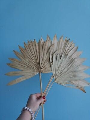Листья пальмы натуральные сухие веером 3 шт