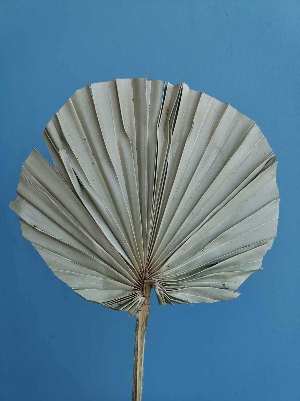 Лист пальмы круглый 1шт