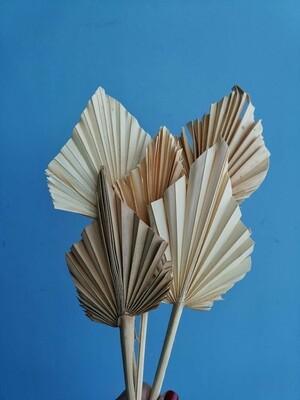 Листья пальмы сухие белые 5 штук