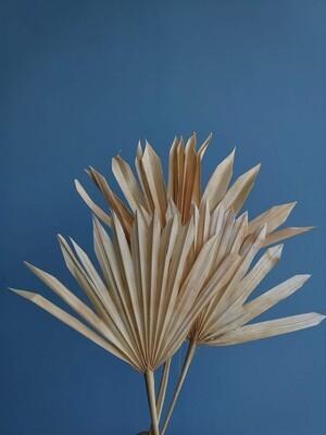 Листья пальмы сухие веером белые 3 шт