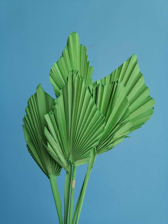 Листья пальмы сухие зеленые 5 штук