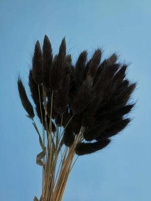 Лагурус черно-зеленый