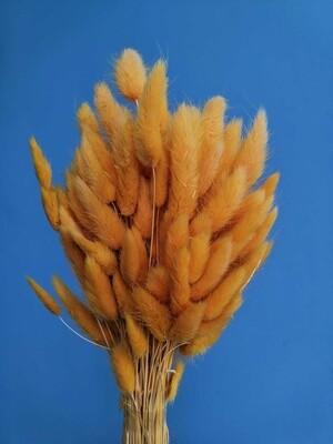 Лагурус желтый шмель
