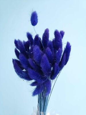 Лагурус сине-фиолетовый тёмный