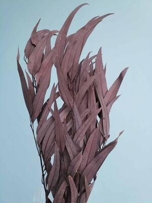 Эвкалипт николь бордовый стабилизированный
