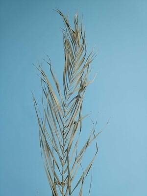 Лист пальмы вытянутый