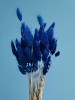 Лагурус синий кобальтовый