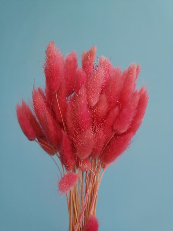Лагурус розовый помадный