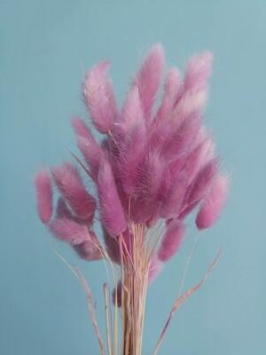 Лагурус розовый цветущая вишня