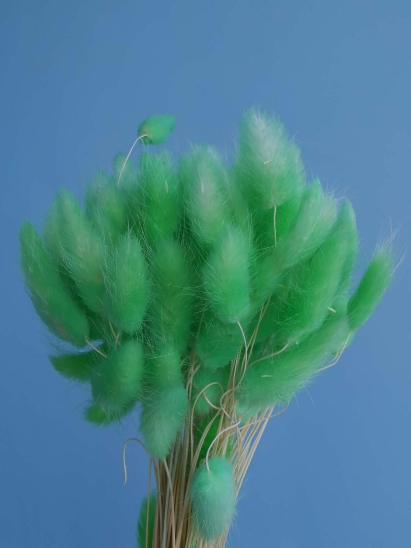 Лагурус зеленый светлый