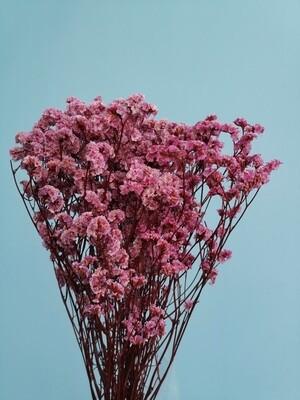 Лимониум розовый нежный стабилизированный