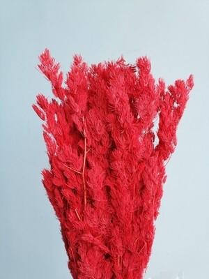 Аспарагус красный стабилизированный большой пучок