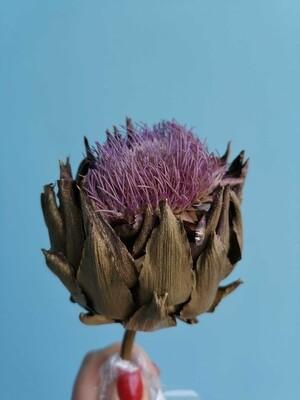Артишок фиолетовый цветущий