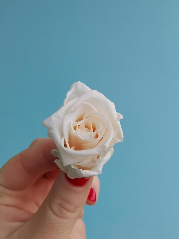 Роза айвори 3см стабилизированная