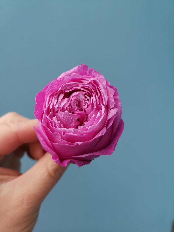 Роза лиловая 4-5см пионовидная стабилизированная