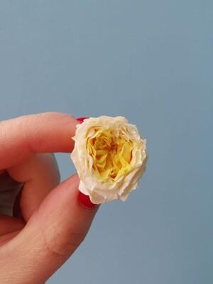Роза белая с желтой серелиной 2см пионовидная стабилизированная