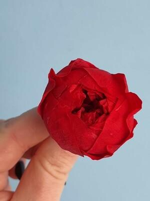 Роза красная 3-3,5см пионовидная стабилизированная