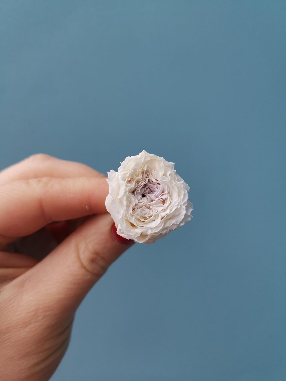 Роза кремовая с сиреневой серединой 2-2,5см пион стаб