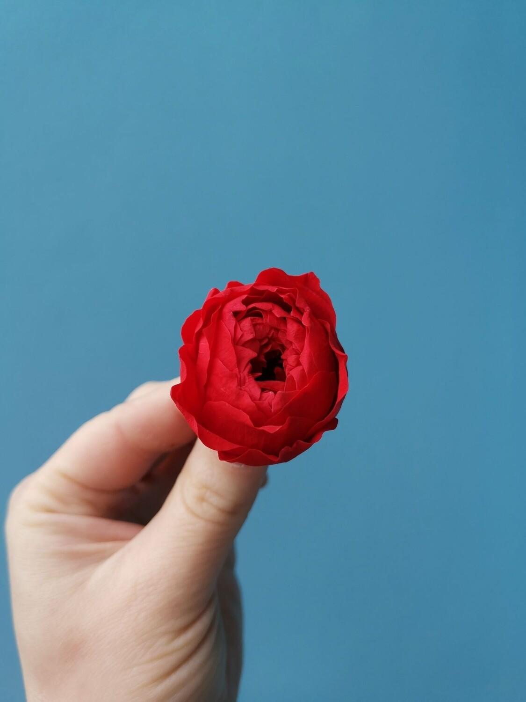 Роза красная 3см пионовидная стабилизированная