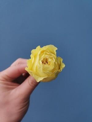 Роза жёлтая 4см пионовидная стабилизированная
