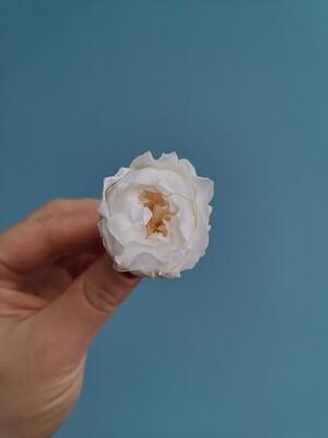 Роза белая молочная 3см пионовидная стабилизированная