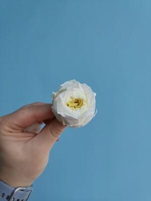 Роза белая с лимонной серединой 4см пионовидная стабилизированная