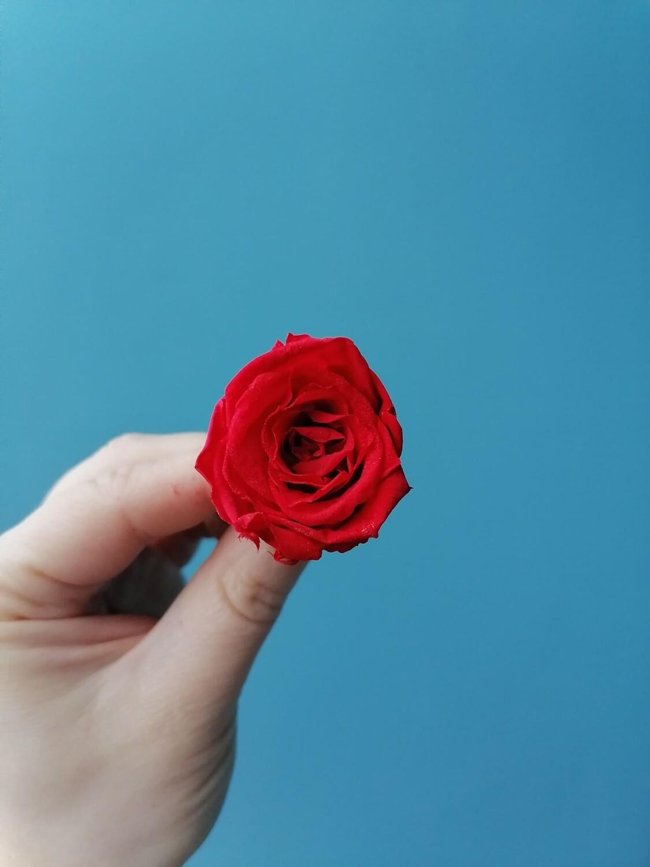 Роза красная 3-3,5см стабилизированная