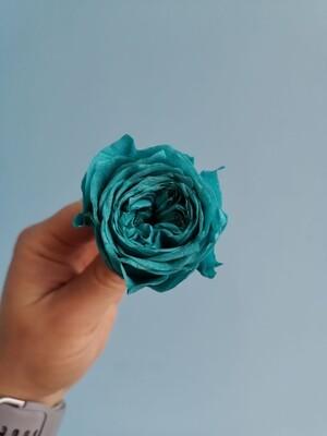Роза бирюзовая 4см пионовидная стабилизированная