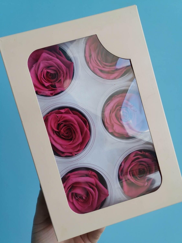 Роза малиновая 5см стабилизированная коробка 6шт распродажа