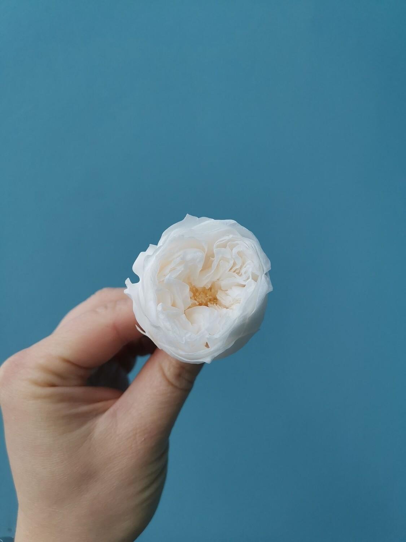Роза бледно розовая пионовидная 3,5см стаб Китай