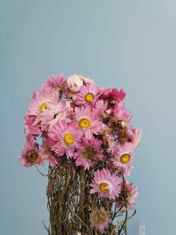 Акролиниум розовый сухоцвет